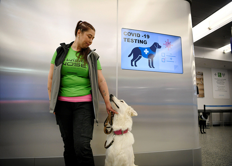 Köpekler enfekte hastayı 10 saniyede tespit edebiliyor