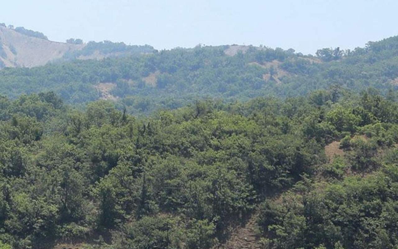 Malatya'da ormanlara girişler yasaklandı