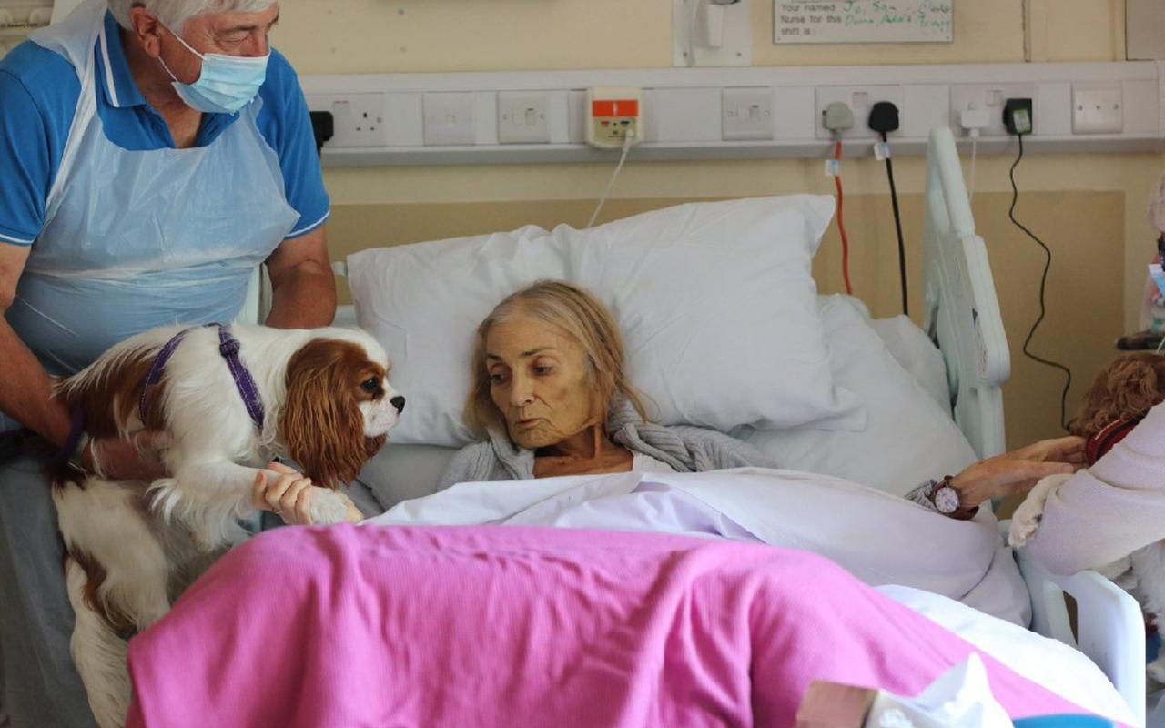 Sosyal medyayı duygulandıran veda: Atı ve köpekleri hasta yatağına getirildi